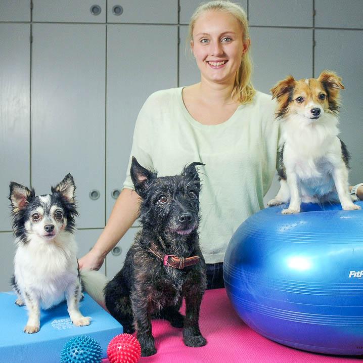 Hundephysiotherapie mit drei kleinen Hunden