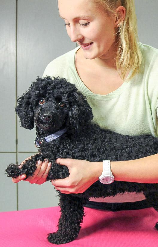 Laura behandelt kleinen Hund